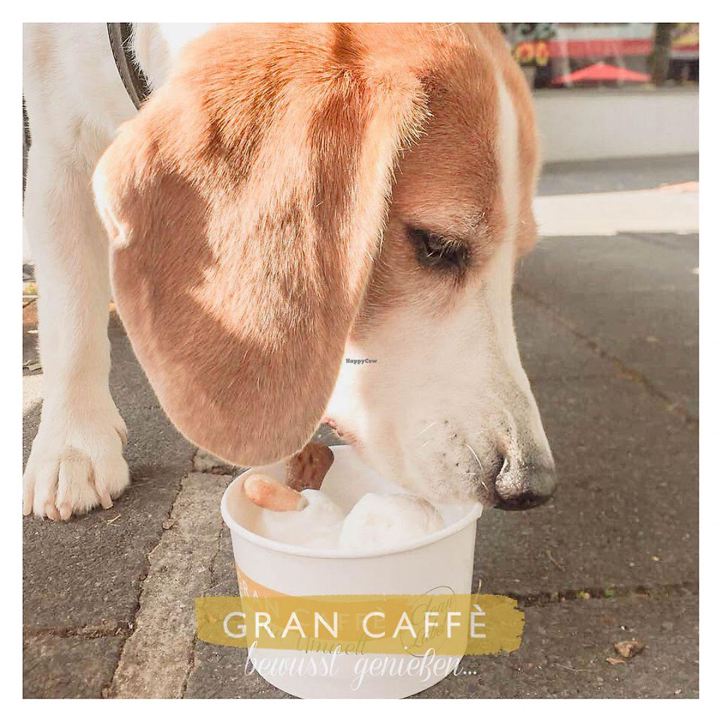 Gelateria Gran Caffe Bruchsal Review Lecker Veganes Eis By Namika Happycow