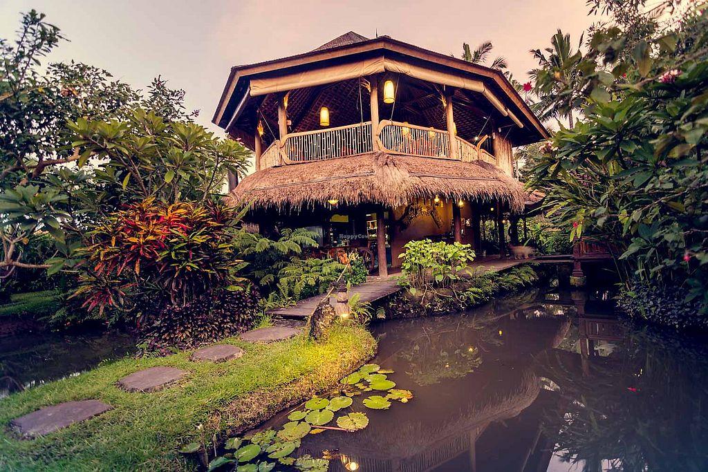 Dragonfly Cafe Ubud Bali Restaurant Happycow