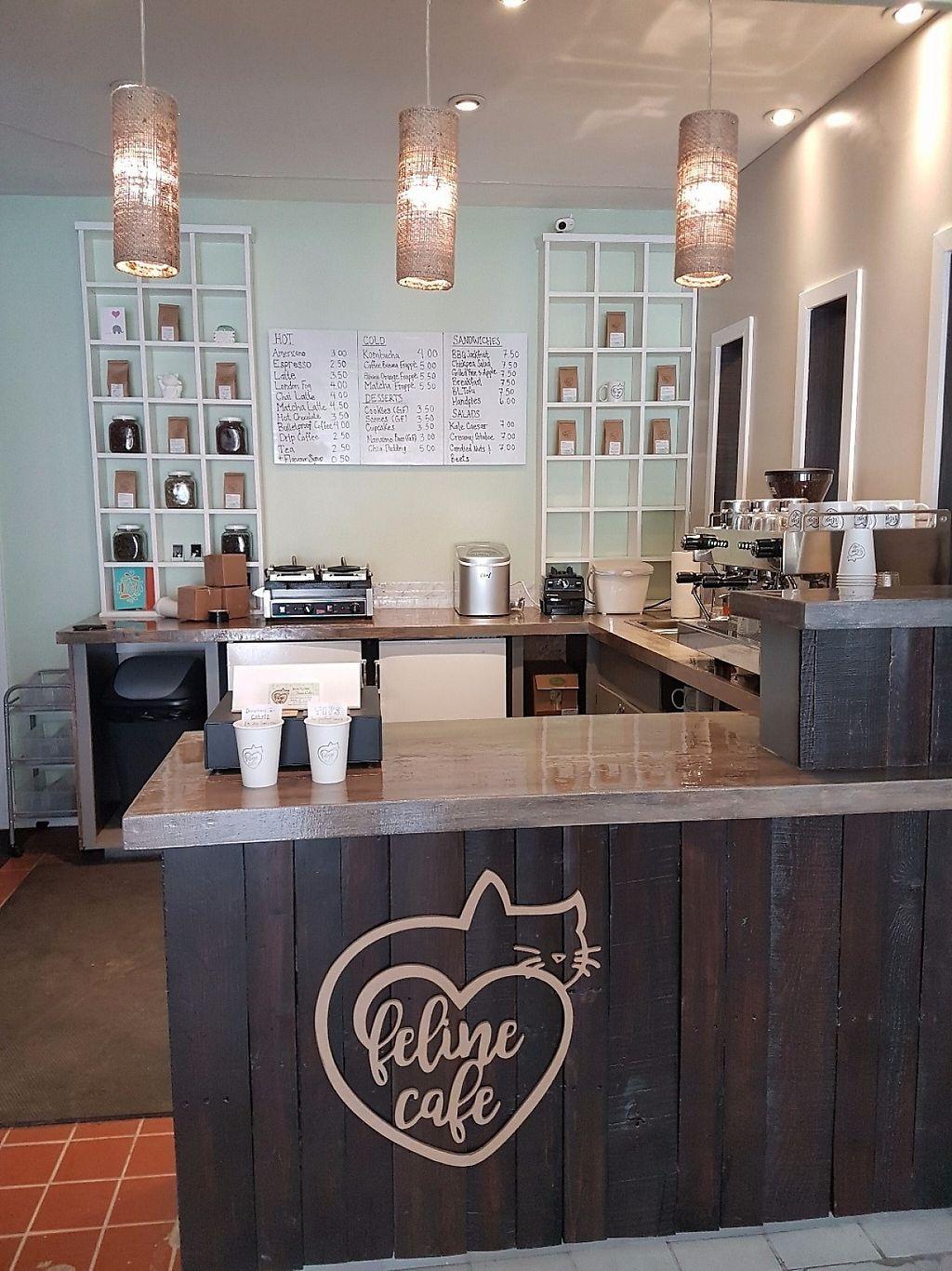 Image result for Feline Café, Ottawa Ontario